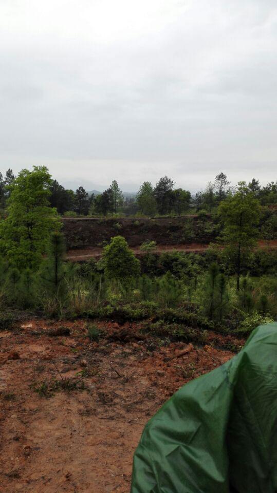 奉新县有多少人口-道风在江西奉新安葬一位老人